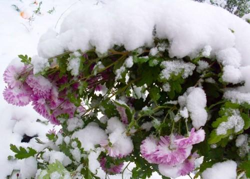 О чем позаботиться цветоводу в феврале