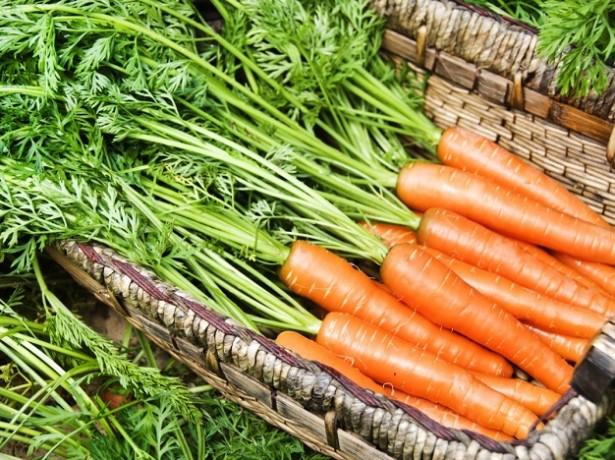Когда лучше убирать морковь для зимнего хранения