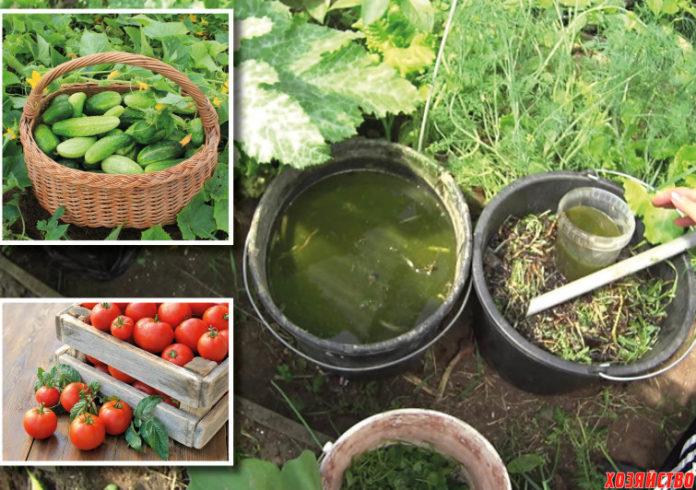 Жидкое зеленое удобрение