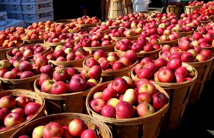 Обильный урожай яблок от горячей воды