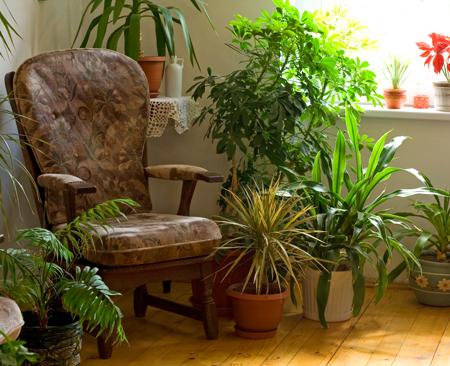 Полив и подкормка комнатных растений зимой