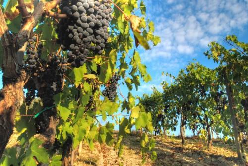 Биоглобин – помощник виноградаря
