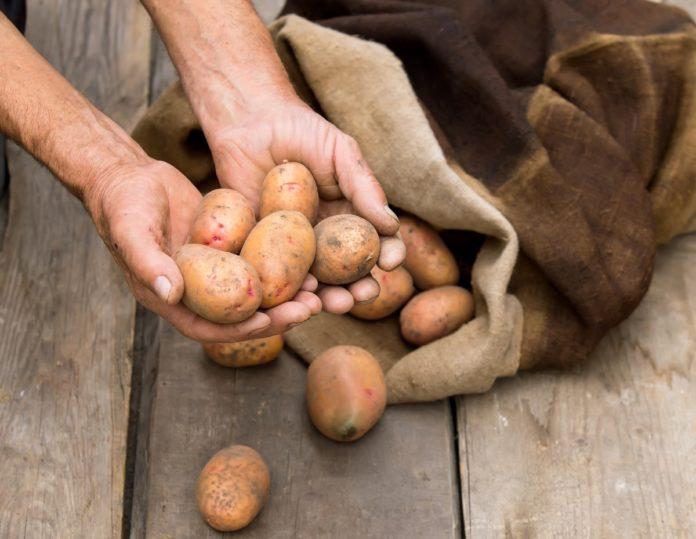 Как я храню картошку и другие секреты