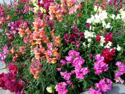 Календарь цветения для цветоводов