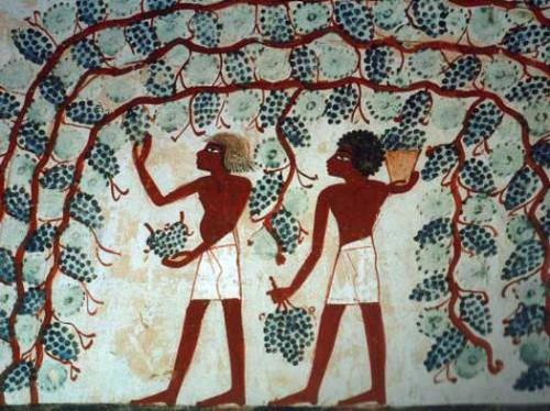 Мировая история вина и виноградарства