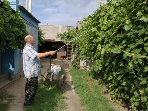 Подкормка винограда – на лист