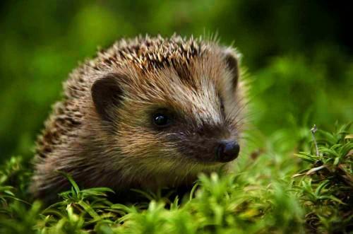 Полезные животные для борьбы с вредителями