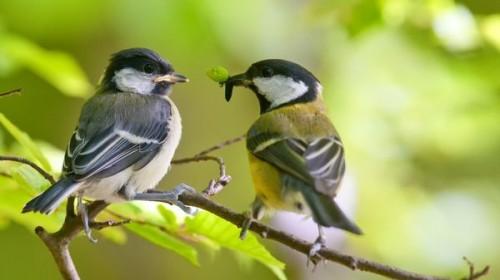 Привлекаем крылатых друзей