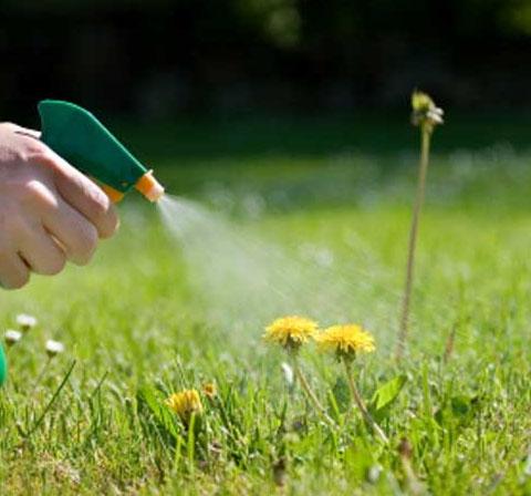 Растительные средства борьбы с вредителями и болезнями сада