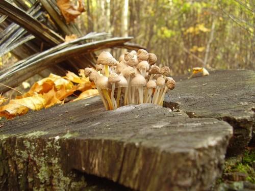 За грибами – в сад!
