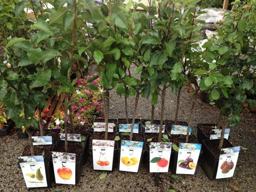 Выбираем саженцы яблонь и груш