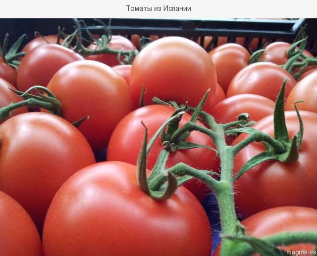 Засухоустойчивые томаты – знойные «испанцы»