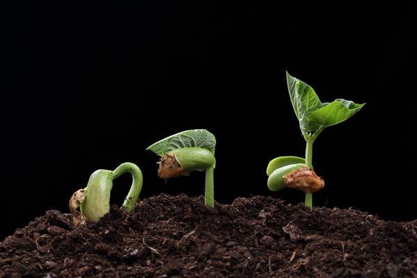 Каким должен быть процент всхожести у качественных семян