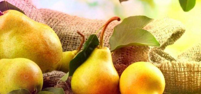 Как выбрать сорта груши – важные критерии