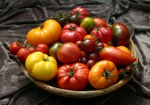 Любим новые и ценим старые сорта томатов