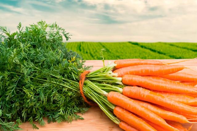 Морковь (советы П. Штейнберга)