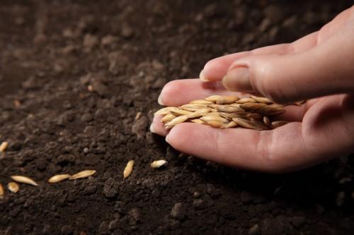 Немного о семенах и посевах