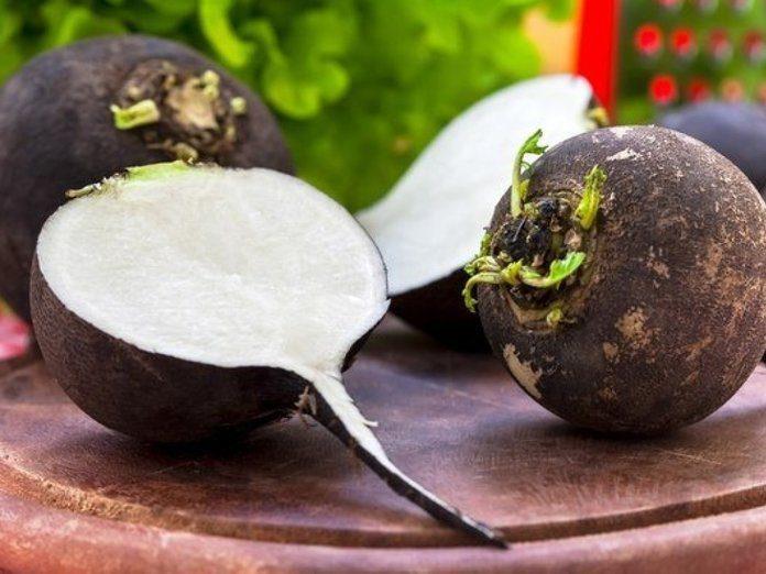 Пищевая ценность редьки посевной