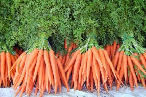 Сбор и хранение урожая моркови