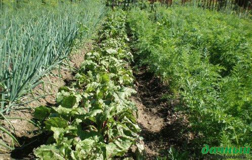 Соседство и чередование огородных культур