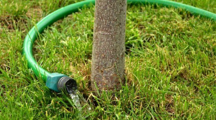 Способы полива плодовых деревьев и кустарников