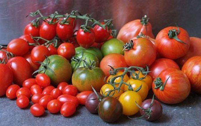 Старинные сорта томатов