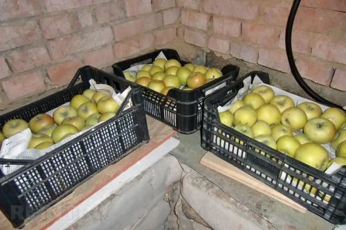 Тара для хранения урожая