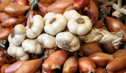 Хранение луковичных