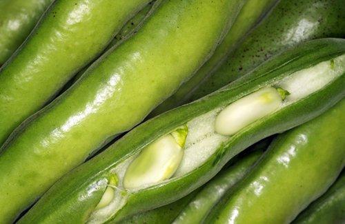 Боб обыкновенный, овощной или конский