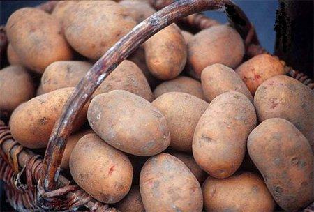 Интересные факты о картофеле