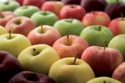 Популярные сорта яблонь