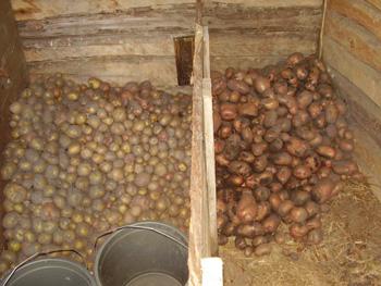 Ямы, бурты, траншеи для хранения урожая