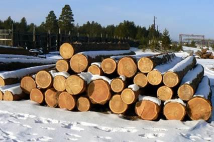Зимняя или летняя? Из какой древесины лучше строить дом?