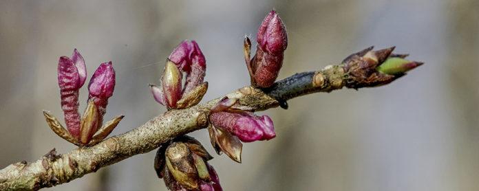 В разгар весны