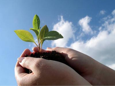 Натуральные средства для защиты растений и удобрения