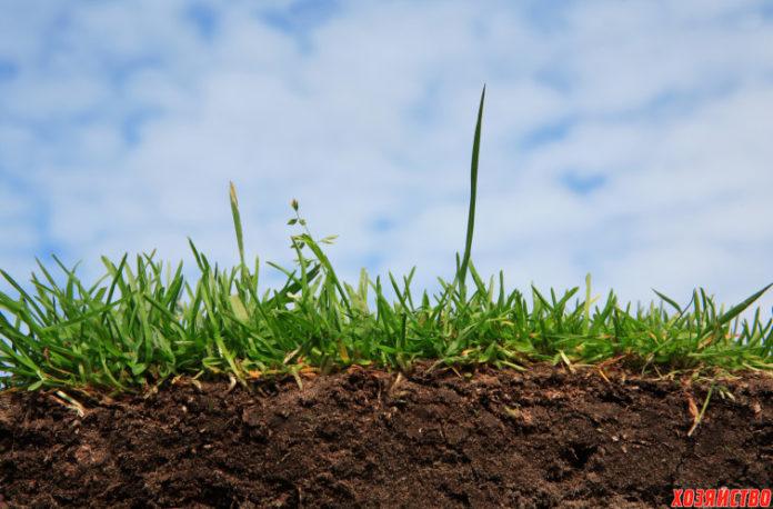 Требования овощных культур к почве