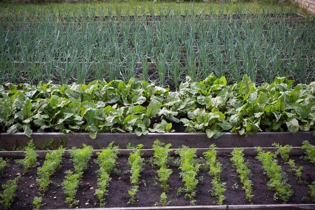 Требования овощных культур к свету