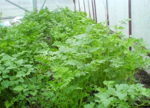 Всесезонная теплица для выращивания зелени и цветов