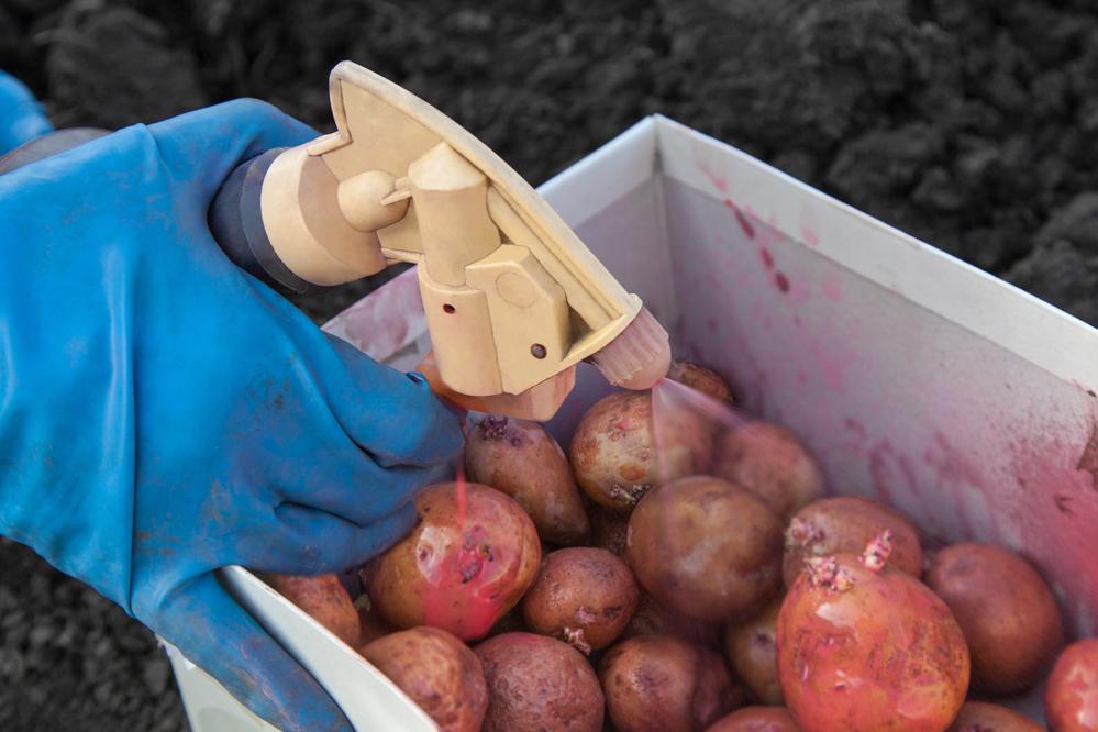 обработка картофеля от вредителей