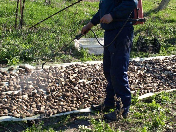 обработка клубней от колорадского жука