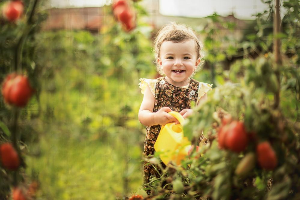 ребенок поливает помидоры
