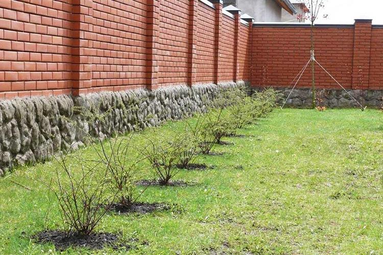 Изгородь во дворе